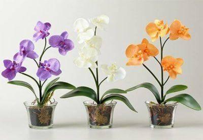 Выращивание орхидей в стеклянных горшках: особенности посадки и ухода, правила выращивания, фото