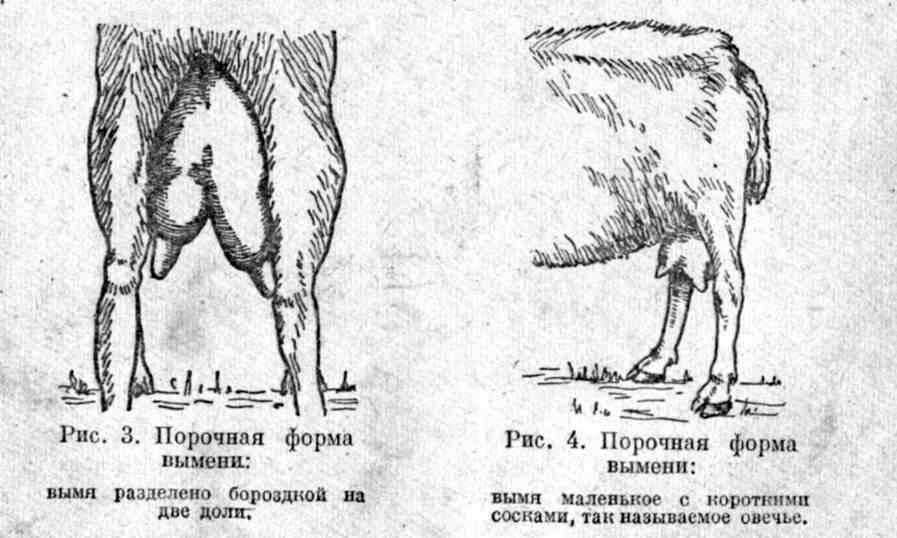 Сколько молока дает коза в сутки: удой за день — когда самка начинает давать и сколько доится месяцев в году — moloko-chr.ru