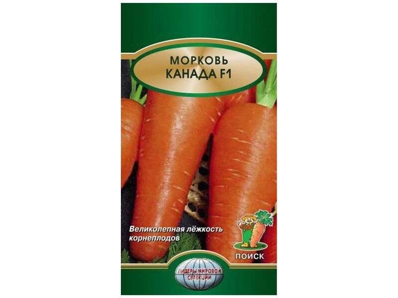 Голландский сорт моркови дордонь — полная характеристика и советы по выращиванию