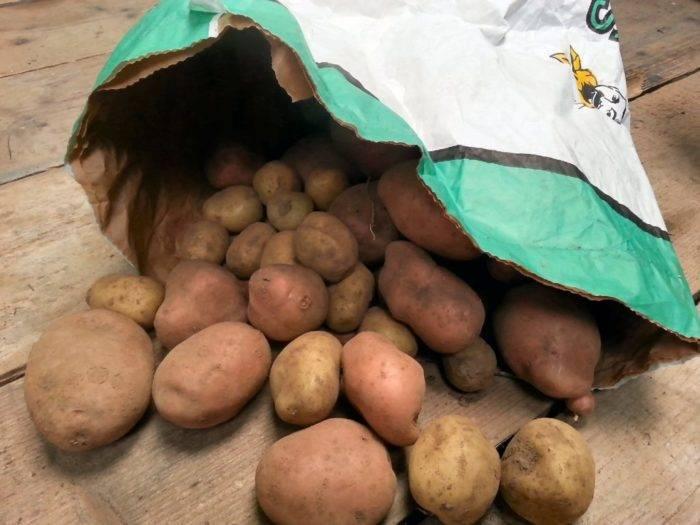 Хранение картофеля в домашних условиях. как подготовить и хранить картофель дома