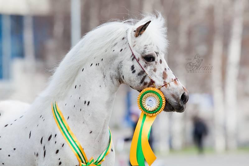 Породы лошадей пони