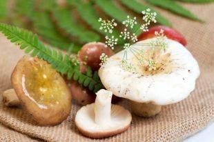 Какие полезные вещества содержатся в грибах? | еда и кулинария | школажизни.ру