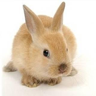 Как приучить кролика к лотку: эффективные методы и полезные рекомендации