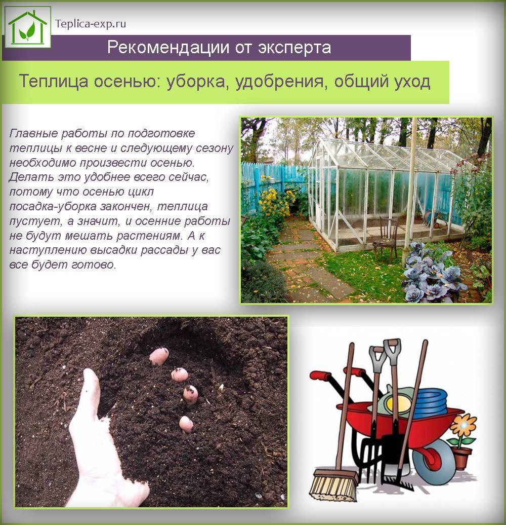 Подготовка дачи к зиме: как защитить домик и участок в холодное время года