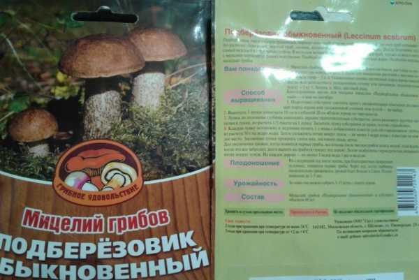 Как вырастить грибы в домашних условиях