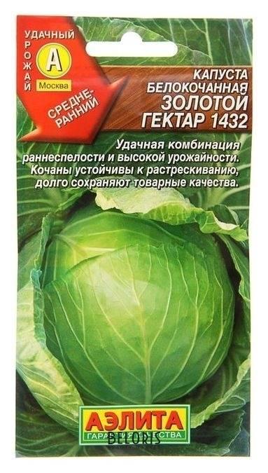 Характеристика капусты золотой гектар: подробное описание сорта, включая правила выращивания, а также фото овоща