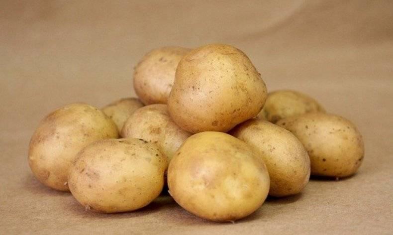 Картофель любава — описание сорта, фото, отзывы, посадка и уход