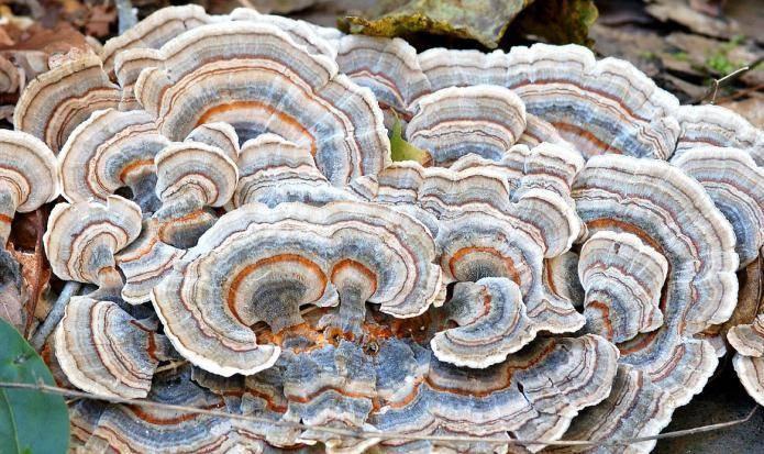 Описание, фото и названия грибов паразитов