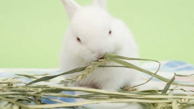 Какие ветки давать кроликам можно и какие нельзя?