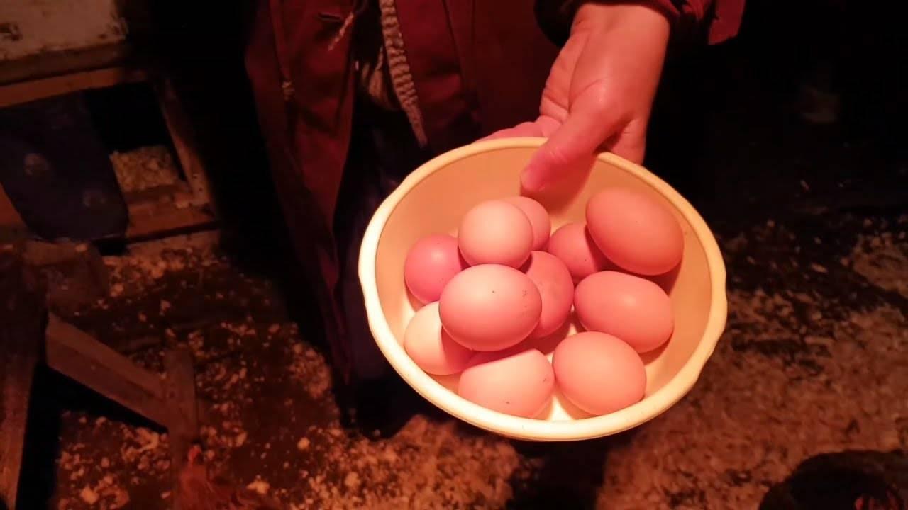 Чтобы куры хорошо неслись заговор   чтоб крупные яйца и каждый день   чтобы не клевали яички