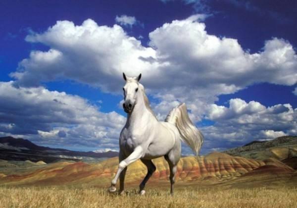 Спаривание лошадей в домашних условиях