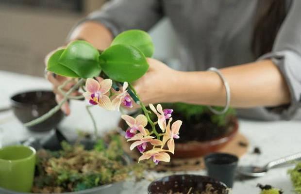 Главный вопрос — какой нужен грунт для орхидеи: основные компоненты и состав