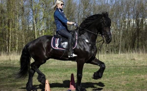 Как седлать лошадь и надевать уздечку: полезные советы для начинающих
