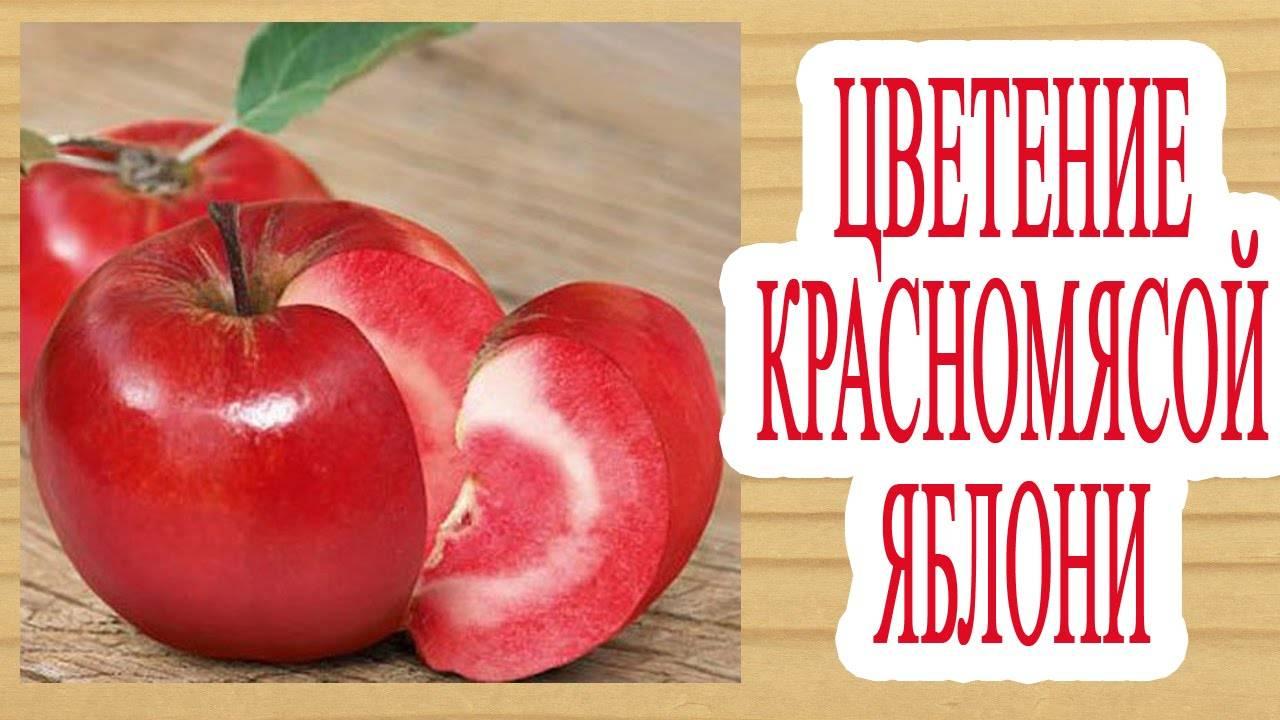 Виноград жемчуг черный, розовый, белый и саба: описание гибридных сортов