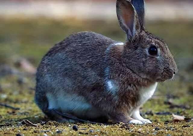 Витамины — основа зимнего рациона для кроликов