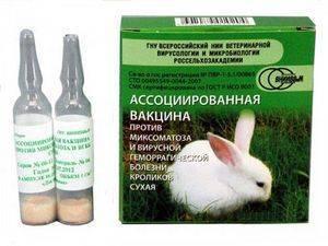 Прививка кроликов зимой: особенности вакцинации от вгбк и миксы