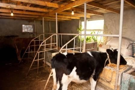 Ясли для коровы: виды и как сделать своими руками