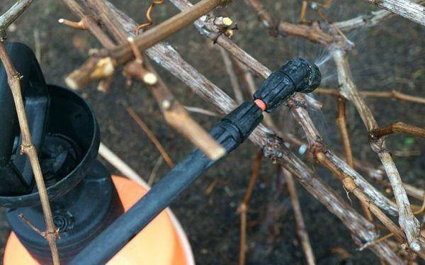 Уход за виноградником осенью: как правильно ухаживать за виноградом, что делать с кустами винограда – дачные дела