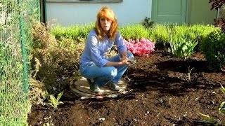 Способы и средства борьбы с сорняками на дачном участке