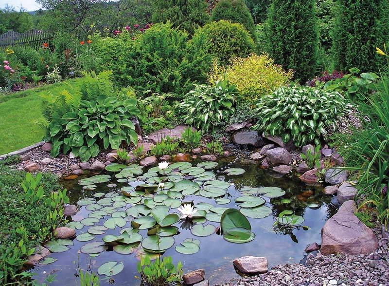 Растения для пруда на даче - какие прудовые растения посадить на даче на берегу, варианты оформления вокруг и около пруда - morevdome.com