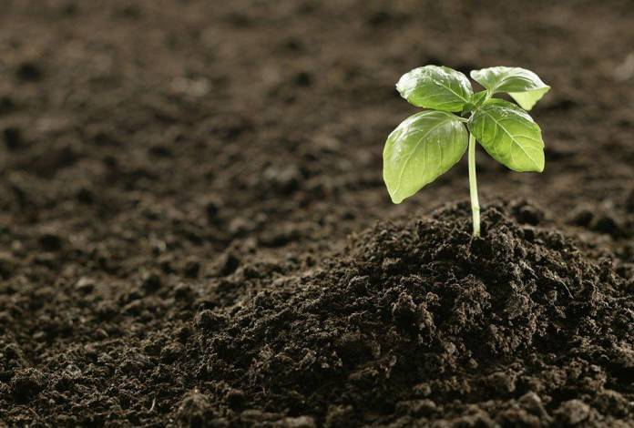Сапропель — что это такое и как использовать его как удобрение