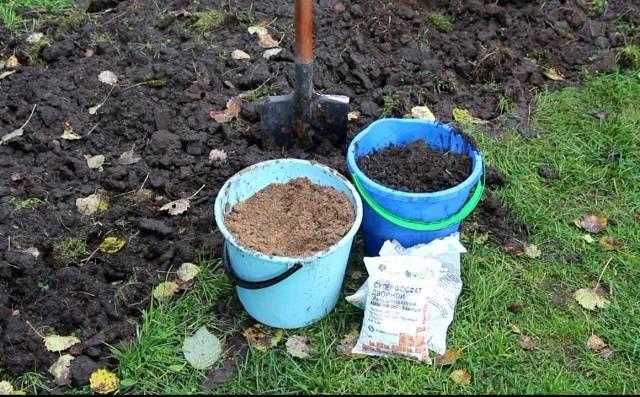 Подкормка моркови народными средствами и минеральными удобрениями