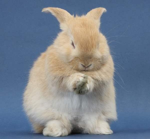 Инфекционный ринит у кроликов: основные причины, методы профилактики и лечения