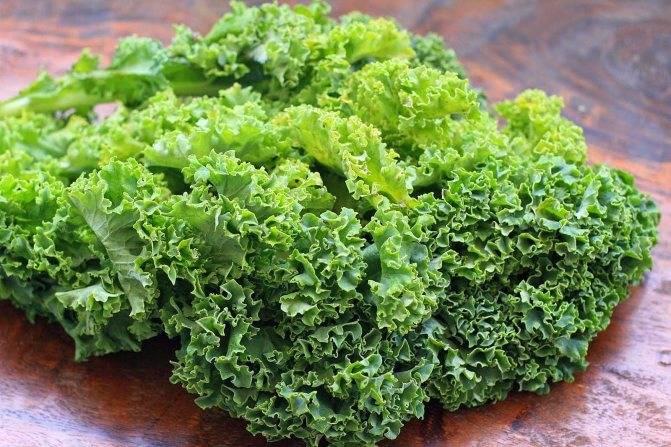 Капуста колобок f1: описание и характеристика гибрида, фото белокочанной, отзывы об урожайности сорта, когда лучше убирать