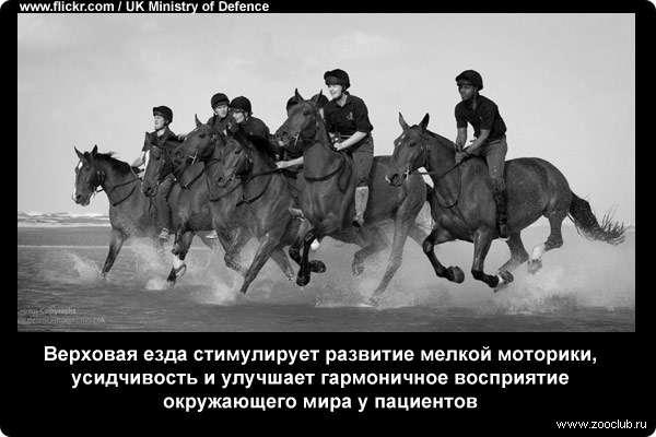 Интересные факты о лошадях: вся информация