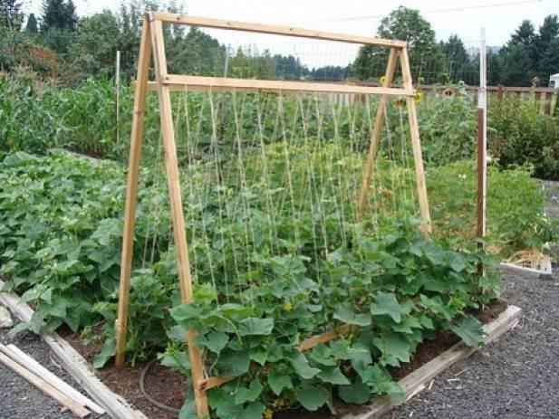 Способы посадки огурцов: оригинальные идеи выращивания на грядках с фото и видео