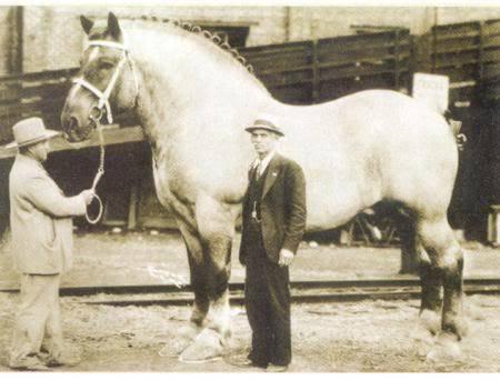 Описание самой большой лошади в мире