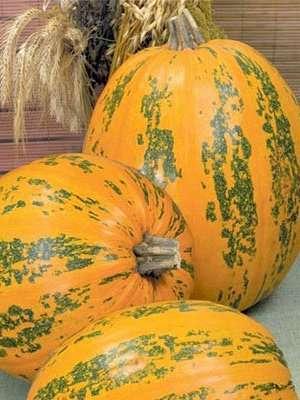 Описание сорта тыквы Витаминная — рекомендации овощеводов