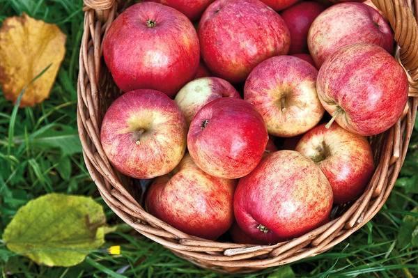 Сорт яблони заветное: описание, фото