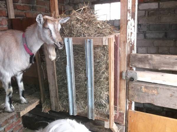 Кормушка для козы - как сделать своими руками: инструкции, фото и чертежи