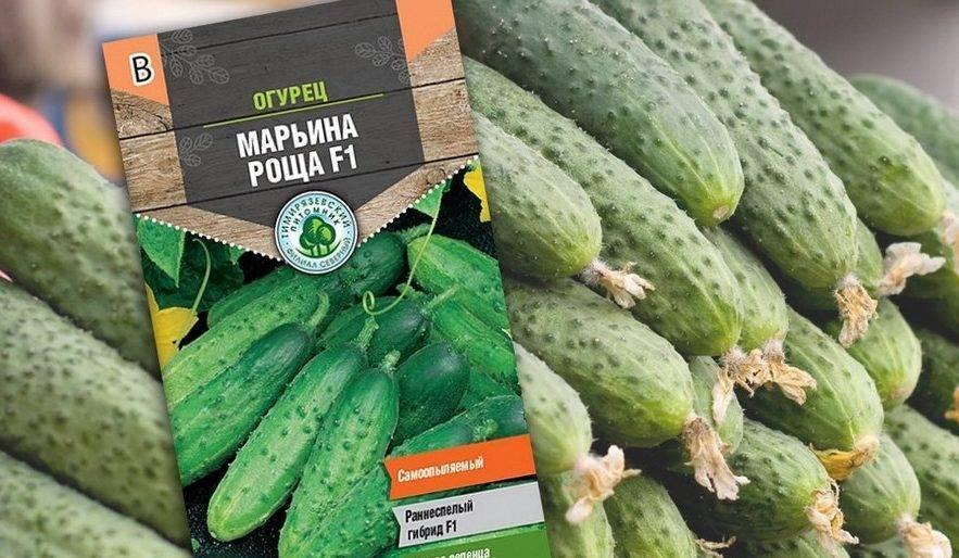 Огурец шоша: описание, фото, отзывы, урожайность