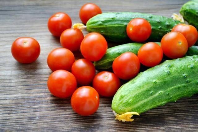 Подкормка дрожжами: помидоры и огурцы на огородном участке