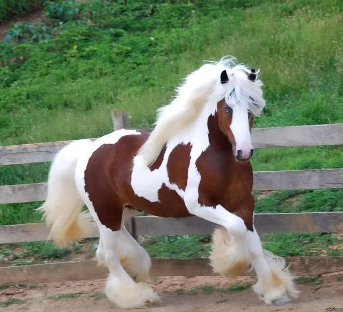 Самая большая лошадь в мире: фото и видео обзор самая большая лошадь в мире: фото и видео обзор