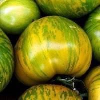 Помидоры для сибири в теплице: лучшие сорта, урожайные, ранние