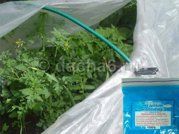 Правила обработки помидоров медным купоросом