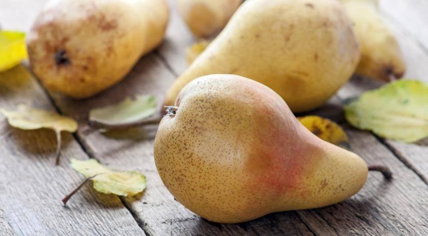 Лучшие сорта груш для урала: самые сладкие и вкусные, описание с названием и фото