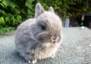 Сколько живут кролики - как долго способен прожить среднестатистический домашний кролик?