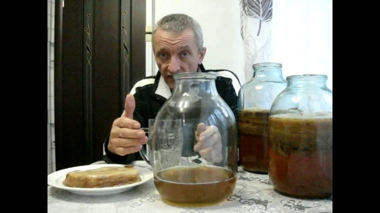 Как вырастить чайный гриб с нуля: описание процесса, уход