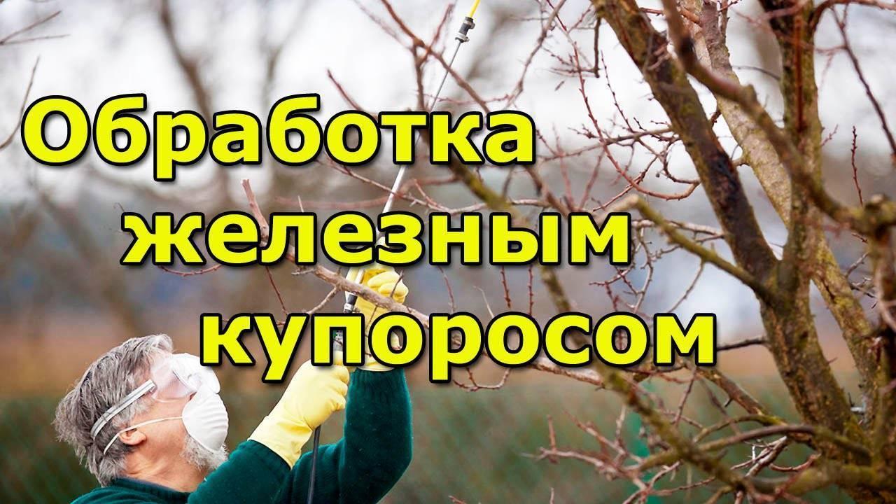 Подготовка яблонь к зиме: как укрыть дерево, чтобы избежать морозобоин