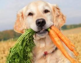Какие овощи включить в рацион собаки, а какие принесут вред