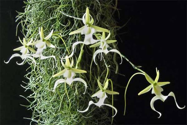Выращивание орхидеи в воде: описание метода, рекомендации, отзывы - sadovnikam.ru