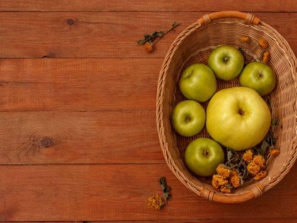 Яблоки семеренко – высокоурожайный сорт