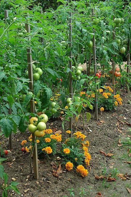 Пермакультура в огороде