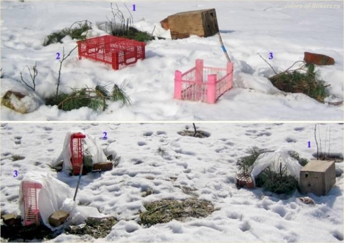 Как и чем правильно укрыть розы на зиму? в подмосковье, на урале или в сибири