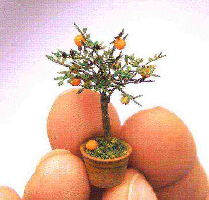 Выращивание апельсина из косточки в домашних условиях: миф или реальность? - sadachanik