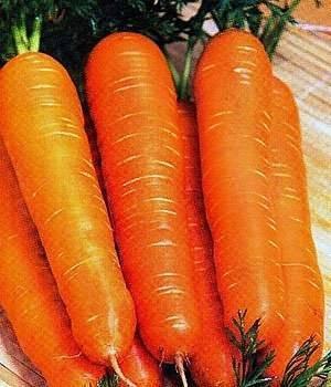 Описание моркови сорта тушон